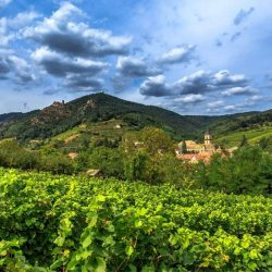 Explore the Top Wine Regions of France